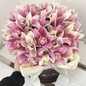 51 орхидея, букет в коробке R789