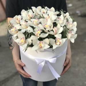 Коробка 25 бутонов орхидеи с зеленью R1251