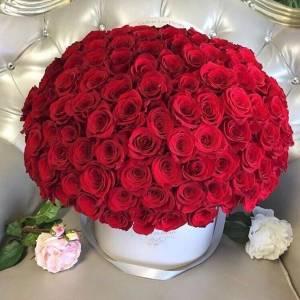 101 красная роза, цветы в светлой коробке R884