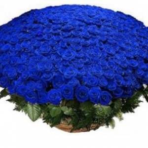 301 синяя роза в корзине R931